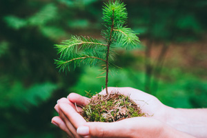 planter-arbre